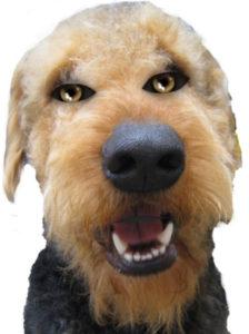 Halloween Airedale Terrier - Halloween History